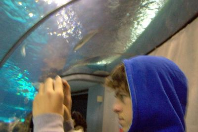 Grandson in shark tunnel