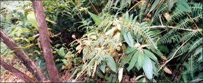 Costa Rican plants
