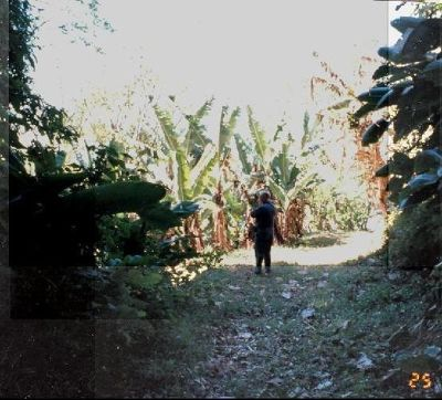 Bob ahead of me on the trail between banana plants