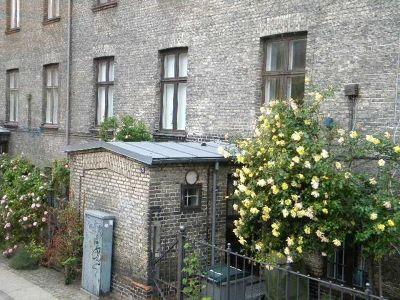4538816-Roses_Copenhagen.jpg