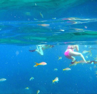 4740423-snorkeling_with_fish_St_Thomas.jpg