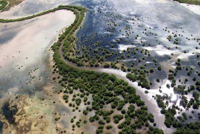 4786600-Mangrove_estuary_Antigua_and_Barbuda.jpg