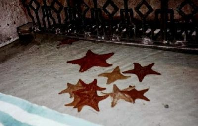 52992986701283-Starfish_in_t..ise_Island.jpg