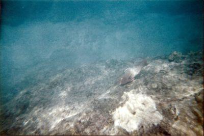 6221934-Rocks_snorkeling_Isla_del_Cano.jpg