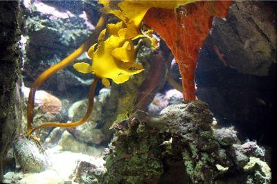 6328130-Prep_for_Snorkeling_Sydney.jpg