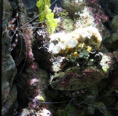 6328134-Prep_for_Snorkeling_Sydney.jpg