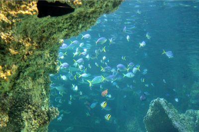 6328138-Prep_for_Snorkeling_Sydney.jpg