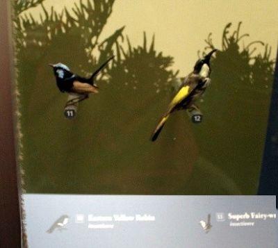 2nd floor - birds