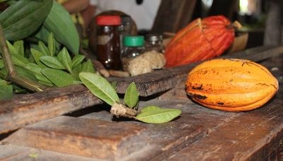 Bay leaves and cocoa pod