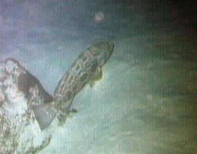 672891-fish_Ambergris_Cay.jpg
