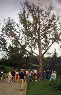 Tour group in Botanical Garden and Bermuda cedar