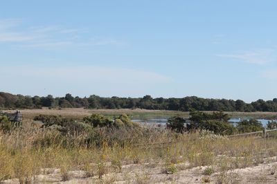 Salt march bird viewing area