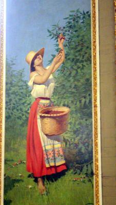Italian peasant picking coffee