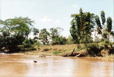 Canals in 1996