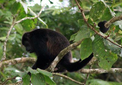 Monkey sitting in a tree