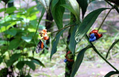7476066-Flowering_plants_Tortuguero.jpg