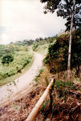 Road from Arenal Gardens