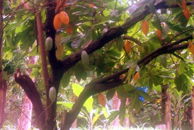 Fruits in a tree