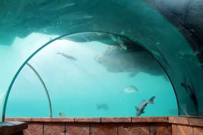 7727267-Shark_tunnel_Nassau.jpg