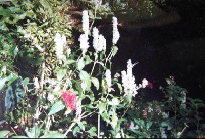 882973-Garden_flowers_San_Jos233.jpg