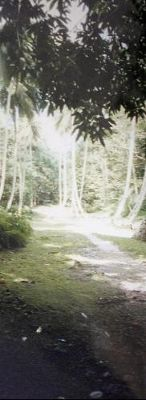 Back along the path