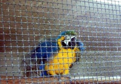 1995 Macaw