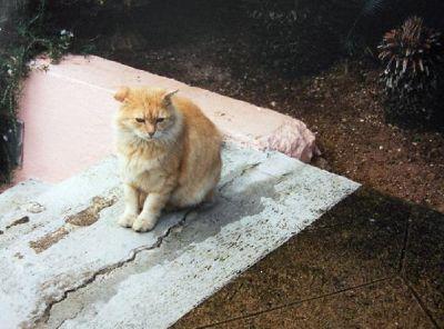 Hotel cat?