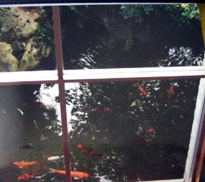 946269-Koi_pond_near_restaurant_Hamilton.jpg