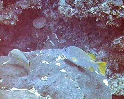 First Dive Trip in Belize