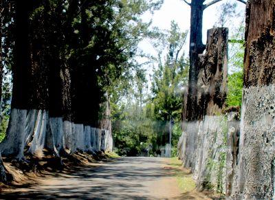 Entrance to Camposanto la Piedad