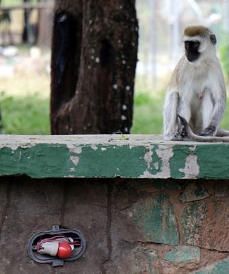 one of the few monkeys we saw
