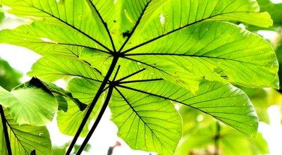 Rain forest leaves