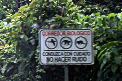 Biological Corridor Drive carefully, No noise