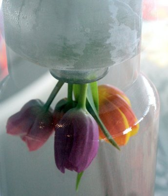 Reflection of tulips in the glass table in the lounge