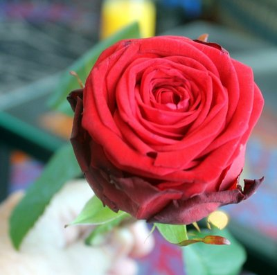Rose from the captain