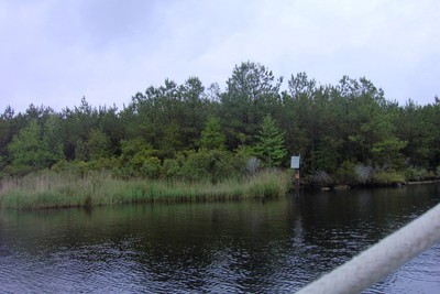 Side of the Alligator-Pungo canal