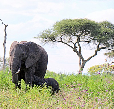 Elephant with a baby