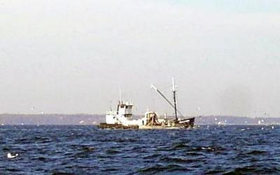Menhaden boats