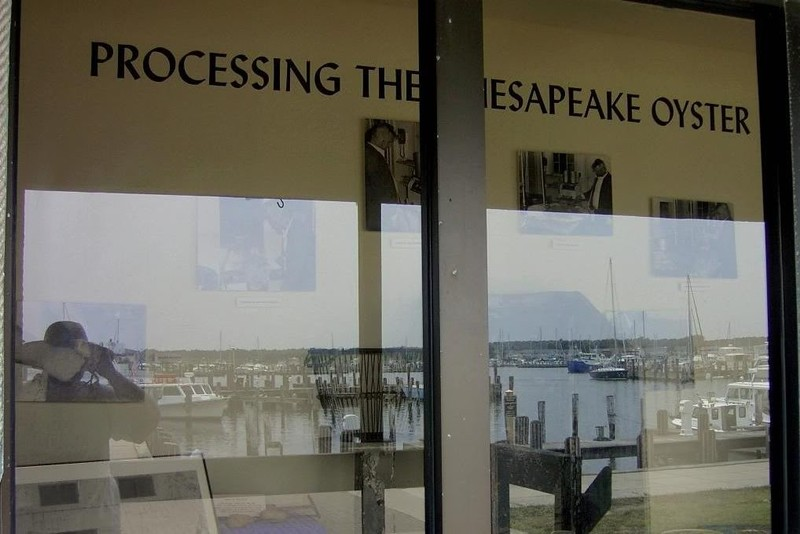 Processing the Chesapeake Oyster (sign outside the museum)