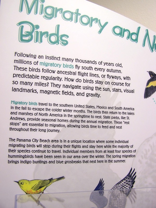 Information on the Migratory birds