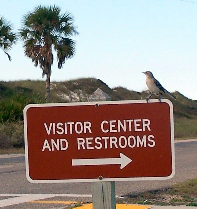Bird on the Visitor Center sign
