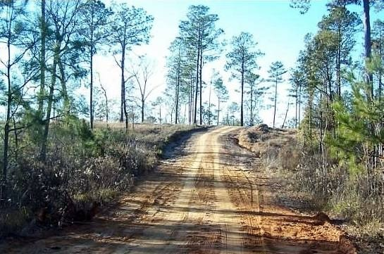 Unpaved road in Spanish Fort