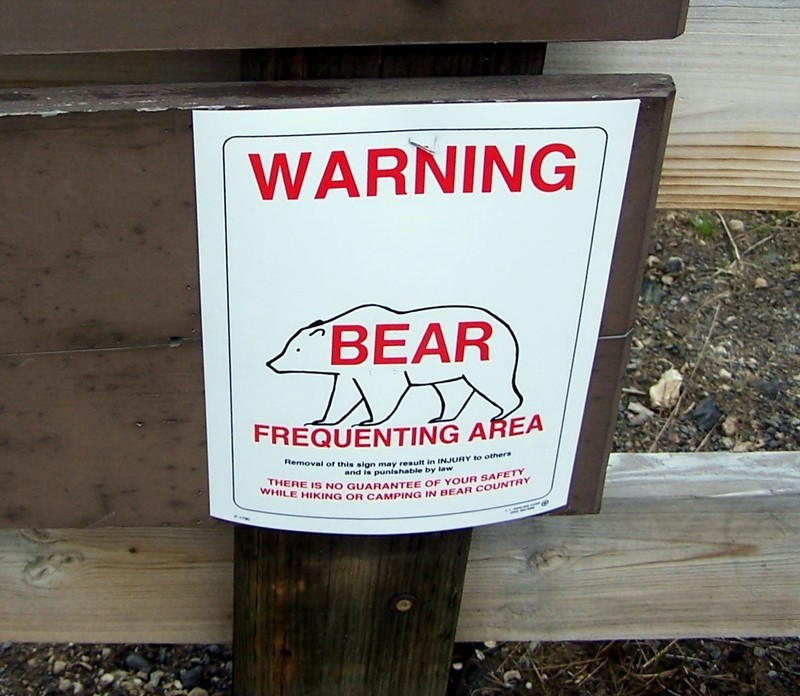 We did not see any bears