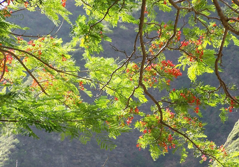 Sun shining through the leaves