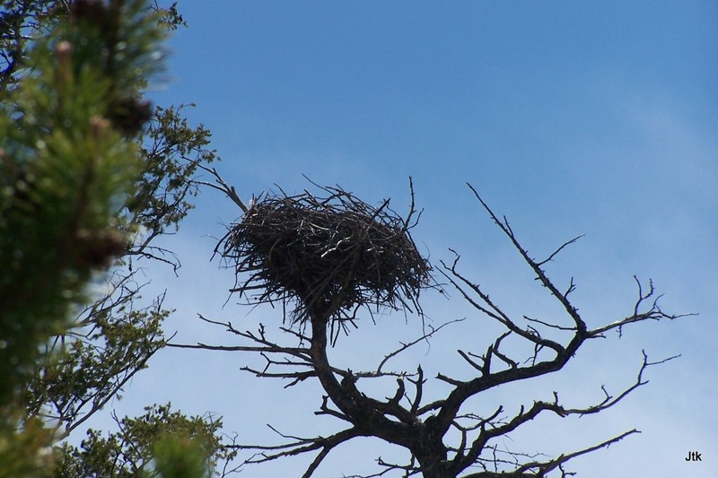 J's photo of the eagle's nest