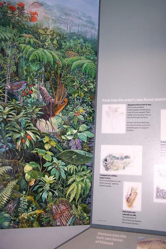 Rain Forest ecosystem