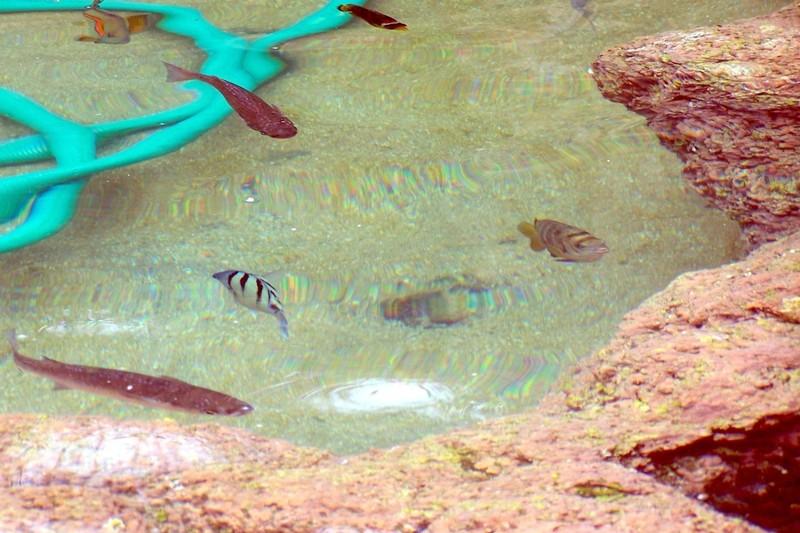 Open water tank