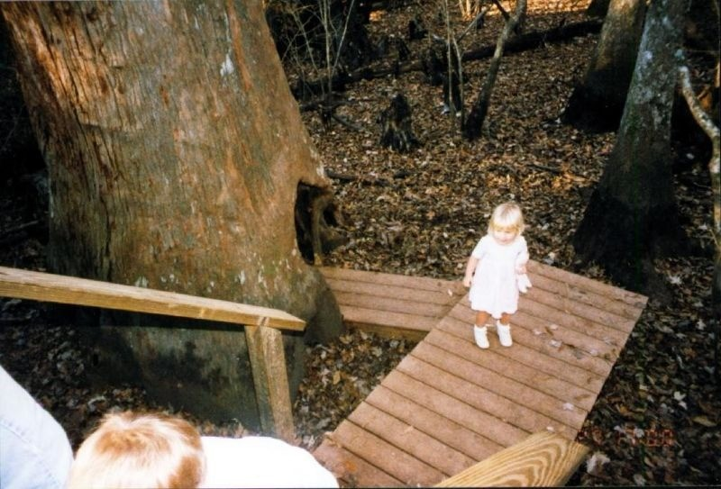 Granddaughter by the hollow tree