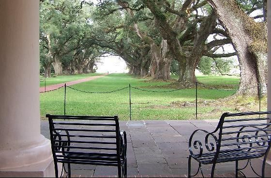 Ground level looking out through the oak alley