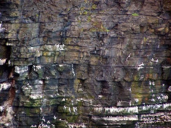 Birds nesting on the cliffs